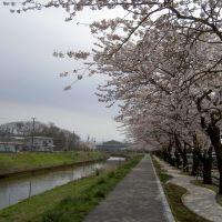 Kusozu River, Ога