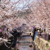 八瀬川桜まつり, Ота