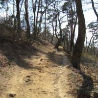 trail in Mt. Kanayama (ByCarioca_Japan), Ота