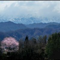 Cherry blossom and Northern Alps in Ogawa Village, Ичиносеки