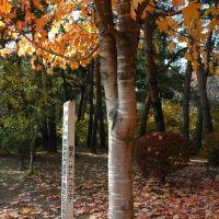 姉妹都市提携十周年記念植樹(06.11.5), Мориока