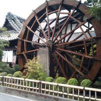 そば茶屋与次郎3, Кагошима
