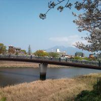 松方橋と桜, Кагошима