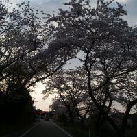 夕白町の桜, Айкава