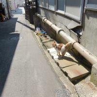 相川のネコ, Айкава