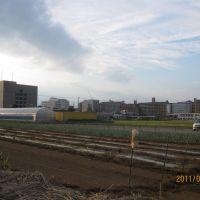 海老名市役所周辺の田畑, Ацуги