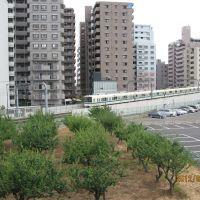 海老名跨線橋から見る小田急小田原線, Ацуги