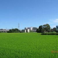 水田と海老名総合病院, Ацуги