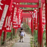 Sasuke Inari, Камакура