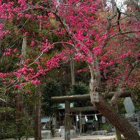 御霊神社(Gryo Jinja Shrine), Камакура