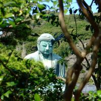 Peeking Through Trees at Daibutsu, Камакура
