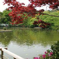 紅葉と皐月, Камакура