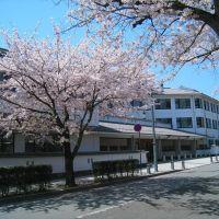 三の丸小学校, Одавара