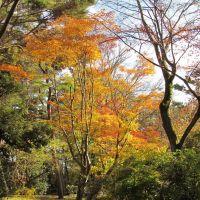京都 龜岡 龜山城址 Kameoka,Kyoto,Japan, Камеока