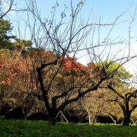 京都 龜岡 龜山城址 Kameoka, Kyoto,Japan, Камеока
