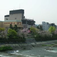 Kamo riverside, Киото