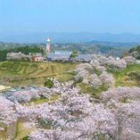 吉四六ランドの桜, Исе