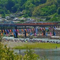 豊後大野市 犬飼のどんこ釣り大会! A fishing tournament...but the participating people seem to enjoy in a river., Сузука