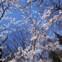 Japan, 〒380-0801 Nagano Prefecture, Nagano 県道37号線, Сува