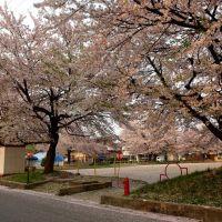 こぼれ桜の若葉町公園, Нагасаки
