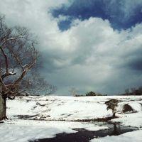飛火野, Нара