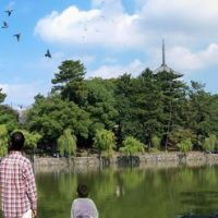 sarusawa-ike,猿沢池