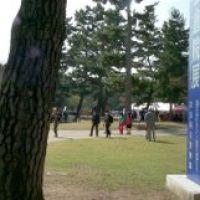 nara national museum,奈良 国立博物館前, Сакураи