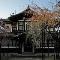 Buddhist art lib of Nara national museum and the droop cherry(Shidare-Sakura) blossoms, Сакураи