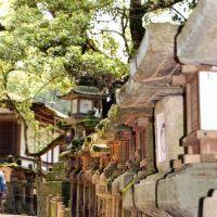 Nara Park Japan o=k, Сакураи