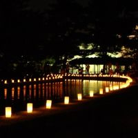 国立博物館の灯り, Сакураи