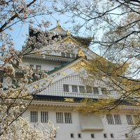 Japan Kyoto Sakura日本大阪京都櫻花, Кайзука
