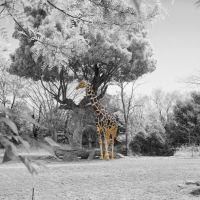 天王寺動物園  Tennoji zoo, Кишивада