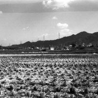 向井田より交野山を望む(昭和63年), Суита