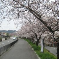 Sakura Road, Суита