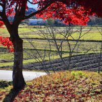 散ってもまだ赤い - 京田辺・普賢寺にて (2012/11/25), Хираката