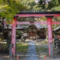 Kasuga Shrine (春日神社) in Seika-chō, Kyoto Prefecture!, Хираката