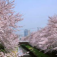 Minami Yono 南与野 鴻沼川, Вараби