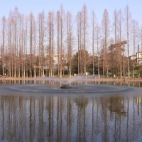 別所沼公園, Вараби