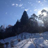 Snowy forest, Йоно
