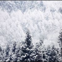 Winter colors (6), Ogawa village, Кавагучи