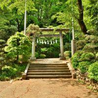 神明社 鳥居 Shinmei shinto shrine, Ханно