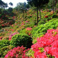 Look at Tsutsuji Flower Hillside, Ханно