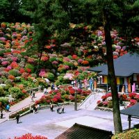 Ome shiofune temple (塩船観音寺1), Ханно