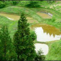 Ricefields at Ogawa Village (Spring), Отсу