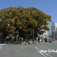 Iwata Station 磐田車站前, Ивата
