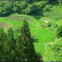 Ricefields at Ogawa Village (Summer), Матсуэ