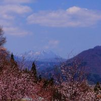 山サクラ越しに黒姫山遠望, Матсуэ