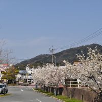 大田の桜, Ода