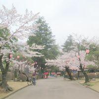 [栃木県] 小山城の城山公園。川沿いにあり、展望もよい。, Ояма