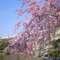 Chiba Park, Ичикава